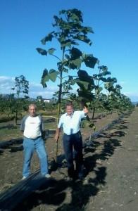 Smaragdfa® ültetvény Szerencsen