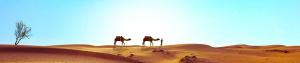 pixabay sivatag